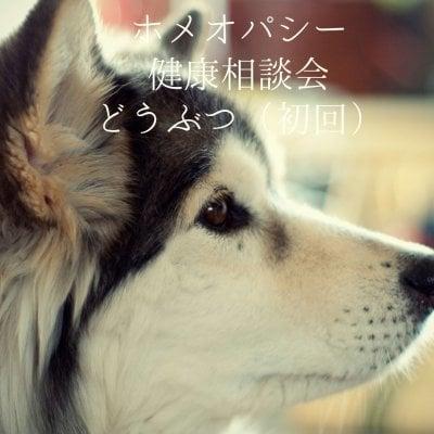 ホメオパシー健康相談【どうぶつ(初回)】