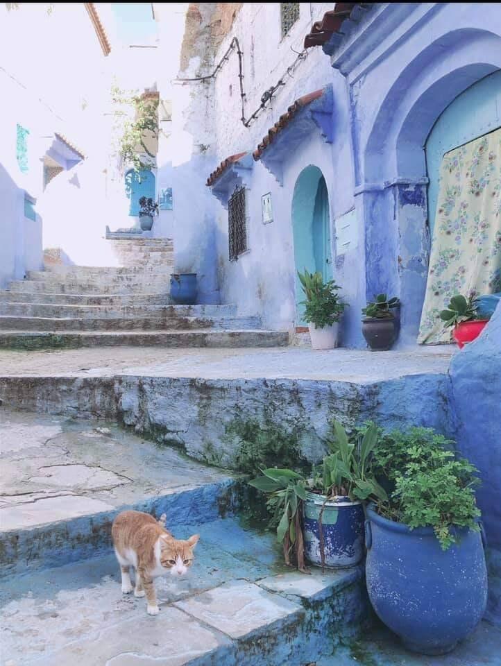 モロッコツアー開催のイメージその5