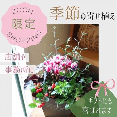 【ZOOMショッピング限定商品】季節の寄せ植え