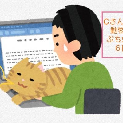 Cさん専用 動物看護ベーシックぷち勉強会チケット(6回分)