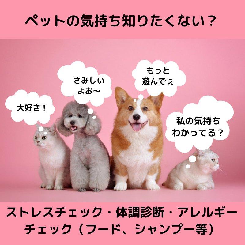 ペット体調診断/ストレスチェック/ペットの気持ち知りたくないですか?のイメージその1