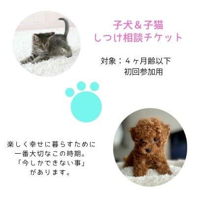 子犬&子猫|しつけ相談チケット(4ヶ月齢以下対象)
