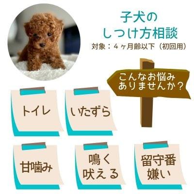 獣医さんの子犬のしつけ方相談|4ヶ月齢以下対象|初回用|オンライン可