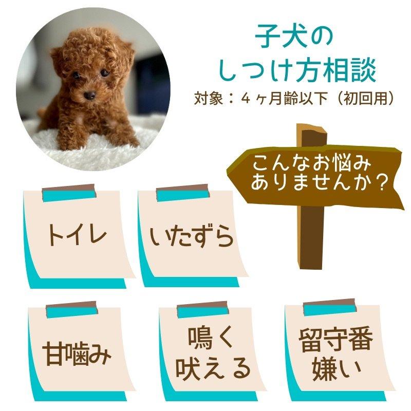 獣医さんの子犬のしつけ方相談|4ヶ月齢以下対象|初回用|オンライン可のイメージその1
