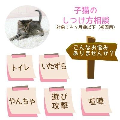 獣医さんの子猫のしつけ方相談|4ヶ月齢以下対象|初回用|オンライン可