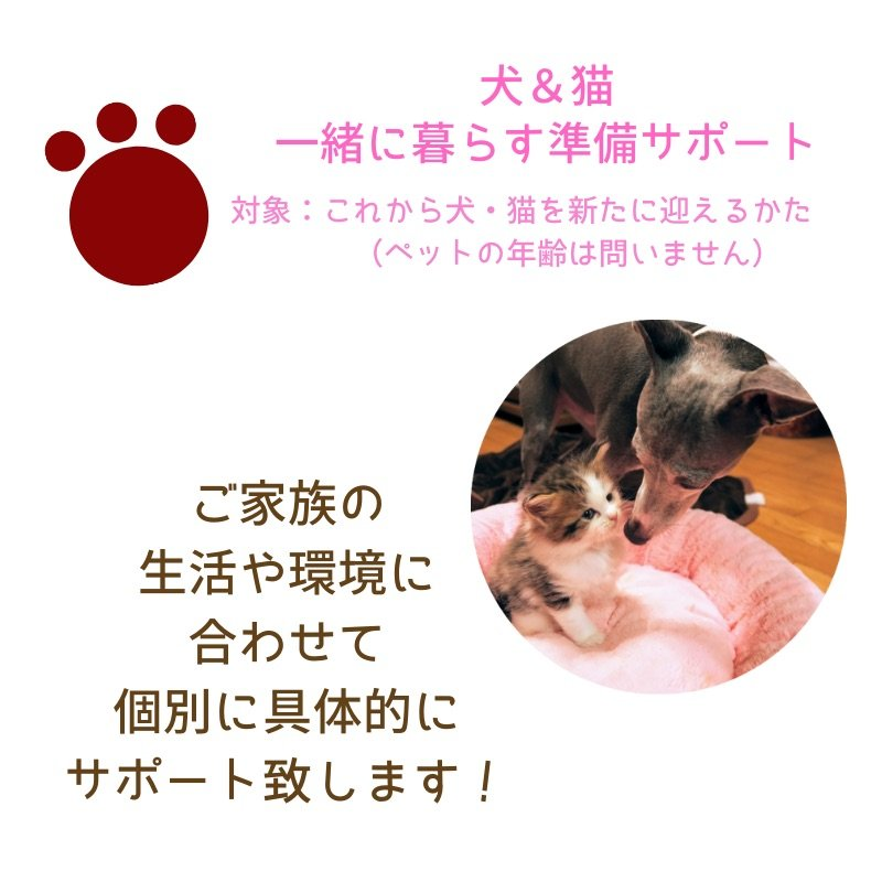 獣医さんによるペットと暮らす準備サポート 犬&猫 オンラインのイメージその1