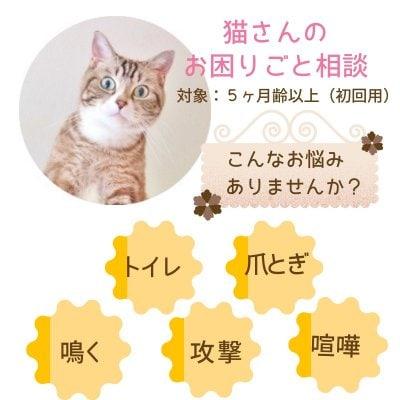 獣医さんの猫さんお困りごと相談|5ヶ月齢以上対象|初回用|オンライン可