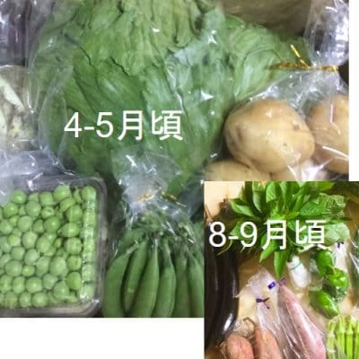 月2箱限定【ぶんちゃんち農園】こだわり野菜2,500円パック
