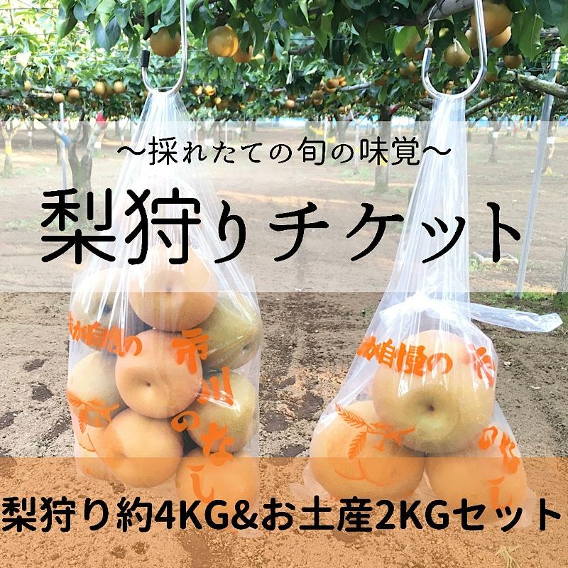梨狩りチケット,梨狩り袋4kg