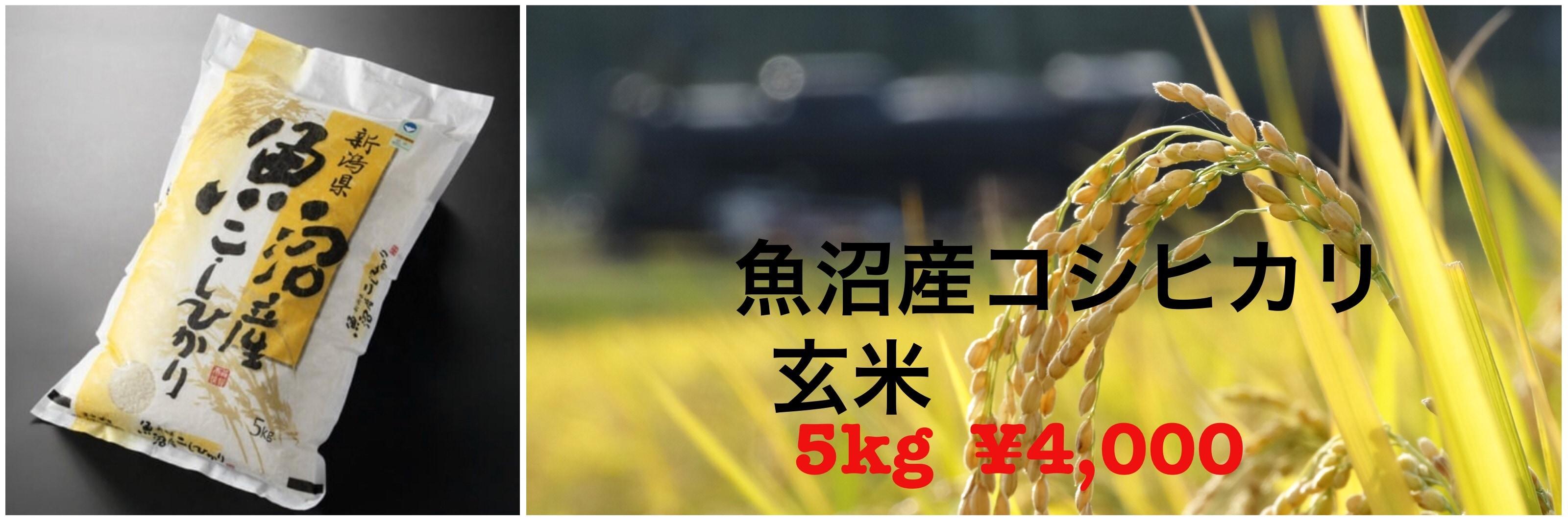玄米5キロ