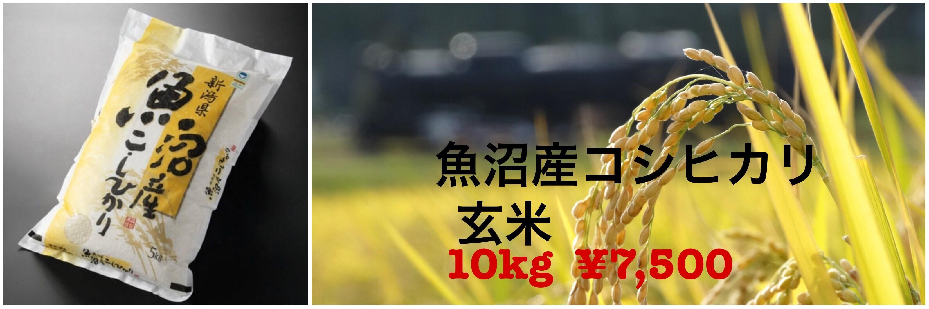 玄米10キロ