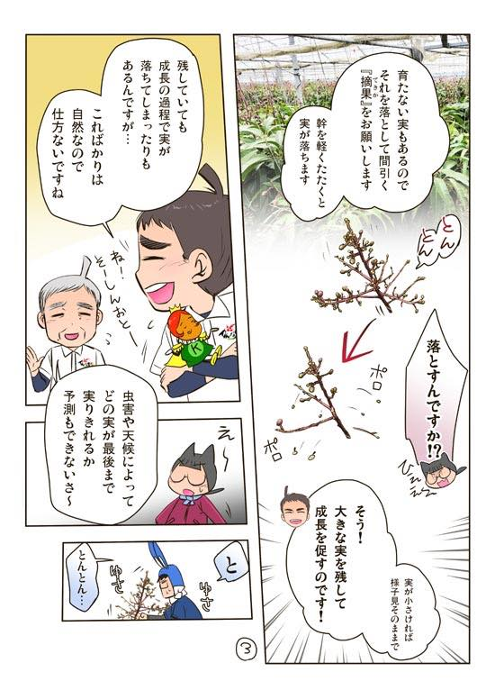 沖縄県糸満産マンゴー通販