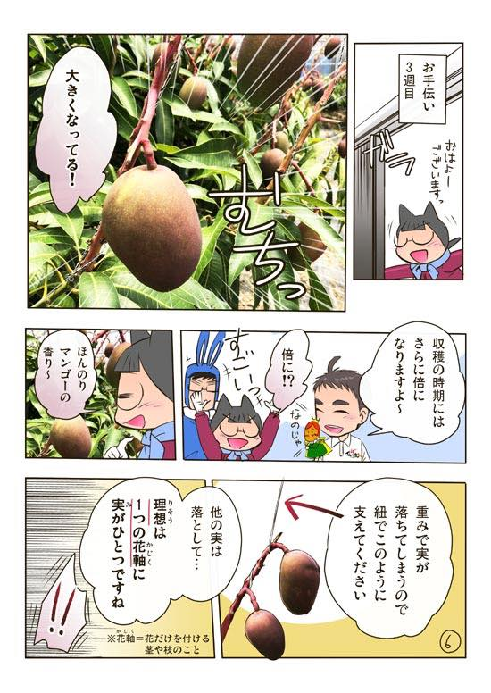 かんな農園の沖縄マンゴー・ゴーヤー・アテモヤ