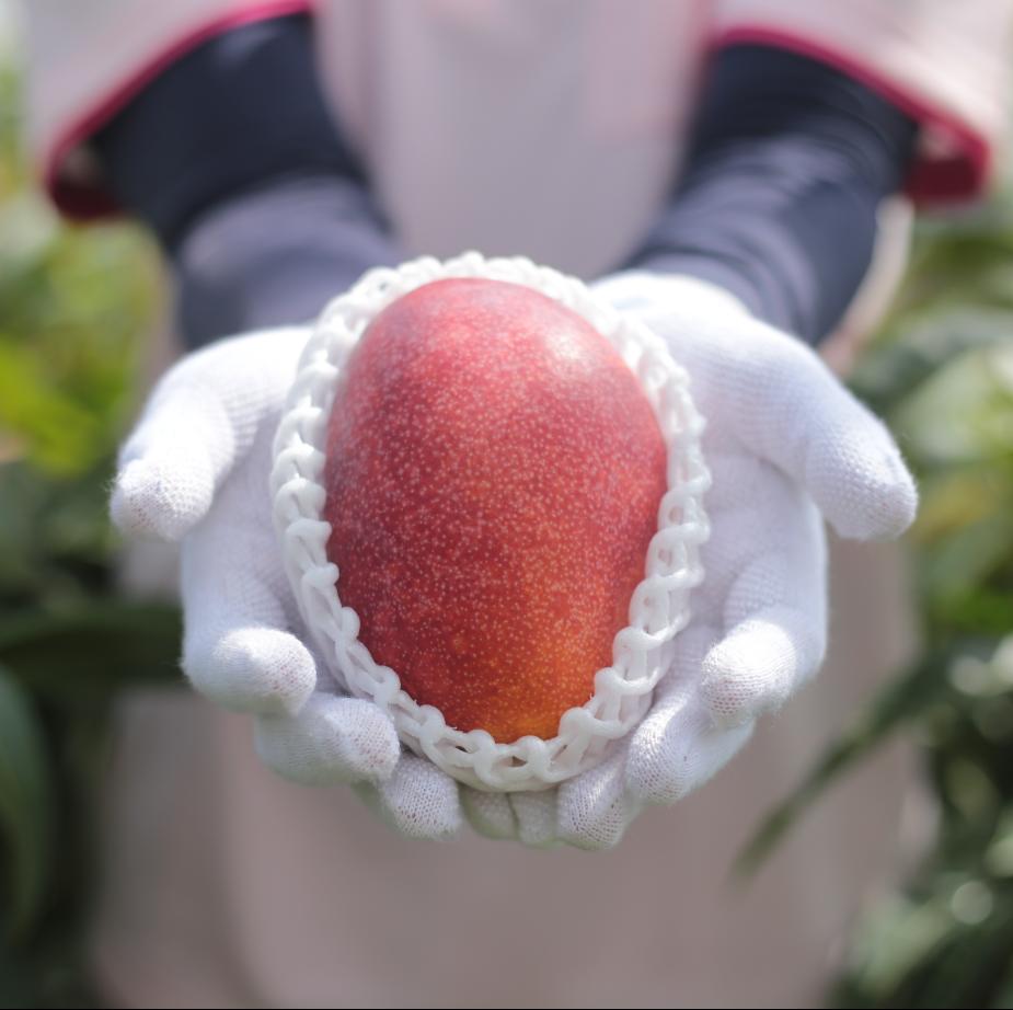沖縄のフルーツ通販は沖縄マンゴー!御中元お中元に最適、最高の果物くだもののフルーツ通販はかんな農園へ!沖縄ゴーヤーもやってます!