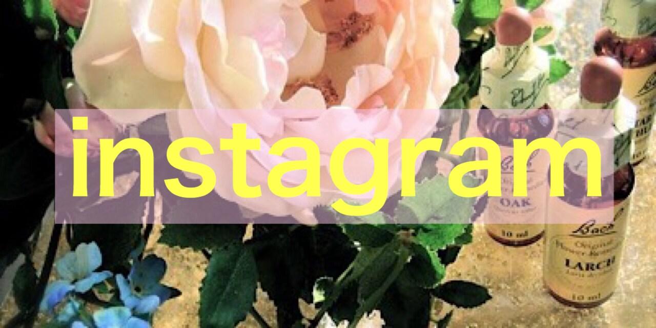 naturalshine instagram