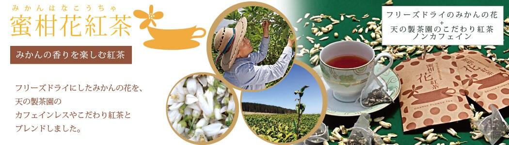 皮ごと食べられるみかんうきこ農園熊本蜜柑紅茶の通販