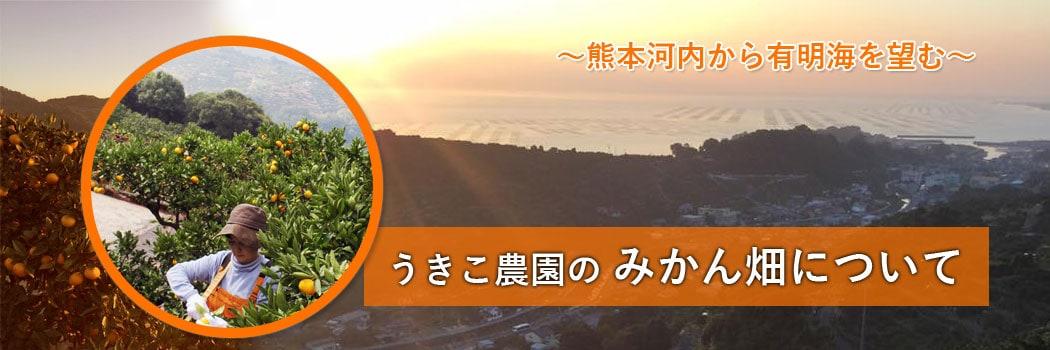皮ごと食べられるみかん通販うきこ農園熊本河内有明海