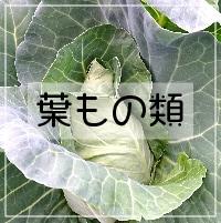 葉物野菜_さいたま榎本農園