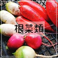 根菜類_さいたま榎本農園