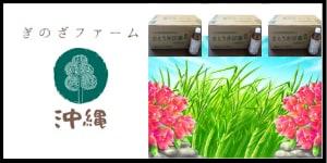 ぎのざファーム沖縄は粉末のさとうきびを使い、網田氏と高安氏と共にさとうきび茶を完成させました。栄養価の高いスーパーフードとして注目されているさとうきびに無限の可能性を感じ、飲料水や食品だけでなく、土づくりなどにも挑戦しています。さとうきびを知れば知るほど人生楽しくなります!!