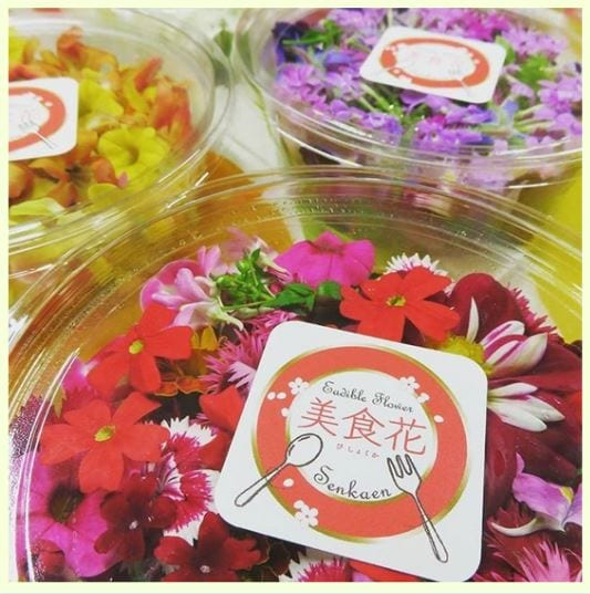 フワラーンダフル 千華園 エディブルフラワー 美食花 食花