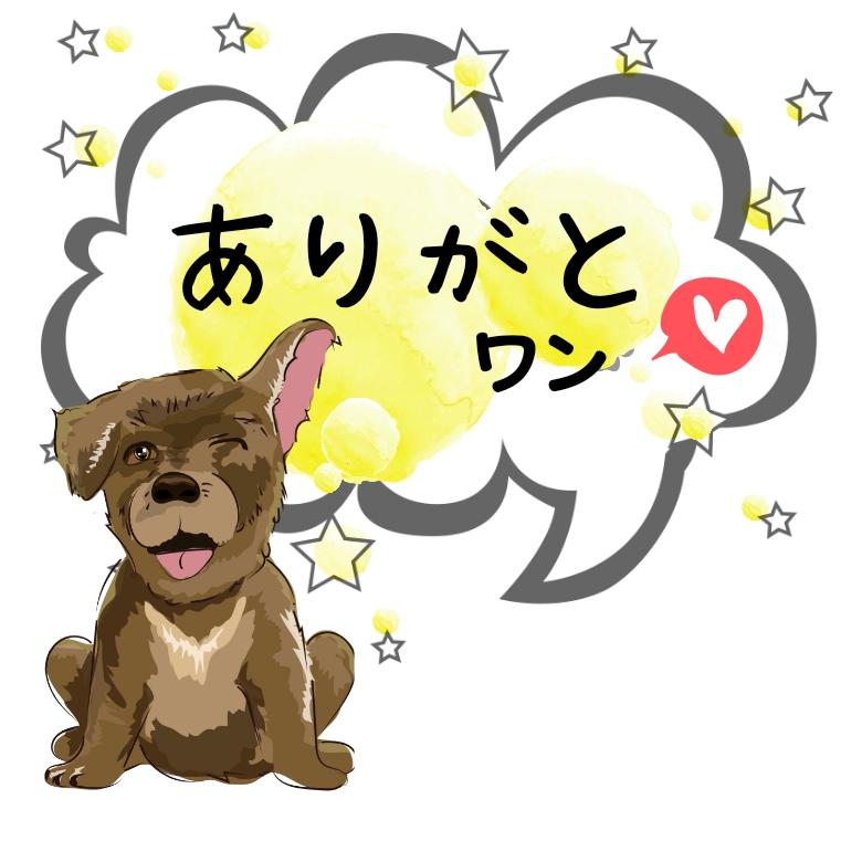 沖縄の保護犬猫へ寄付していただいた皆様へ、感謝の言葉、ありがとうをお伝えしています。