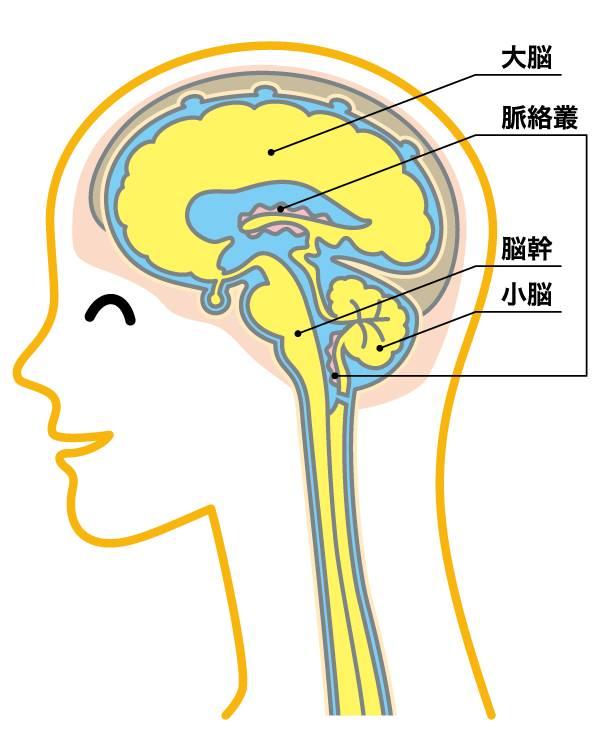 西宮で自律神経の整体なら中央カイロプラクティック院西宮へ|上部頚椎(首)の専門整体で首痛・頭痛・肩こりから自律神経失調症のお悩みまで|アトラスオーソゴナル・カイロプラクティックを用いる西宮の整体です。