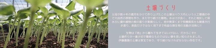 千葉県旭市こだわりづくしのマスクメロン通販 伊藤農園 土壌づくり