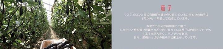 千葉県旭市こだわりづくしのマスクメロン通販 伊藤農園 茄子