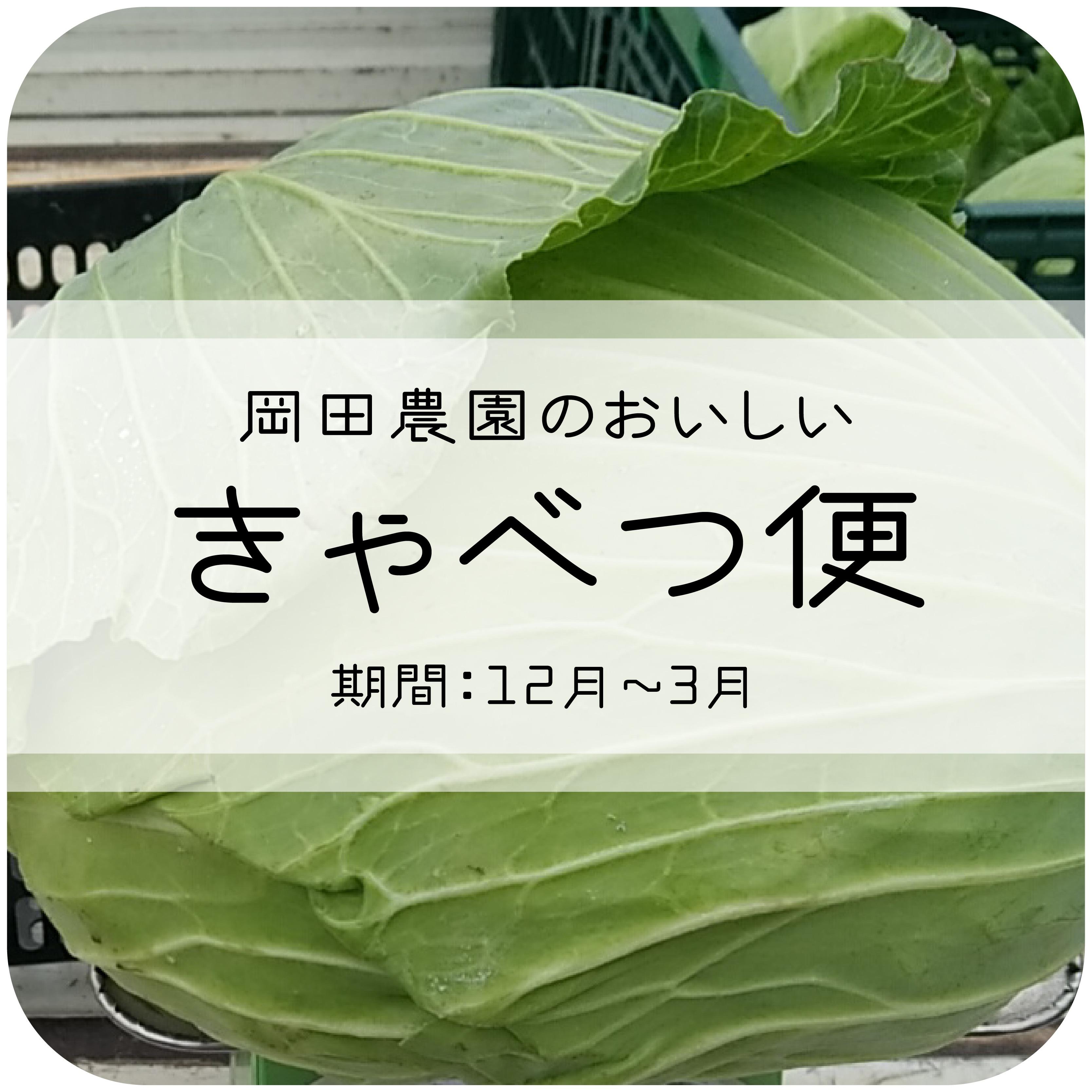 岡田農園のおいしいキャベツの定期便