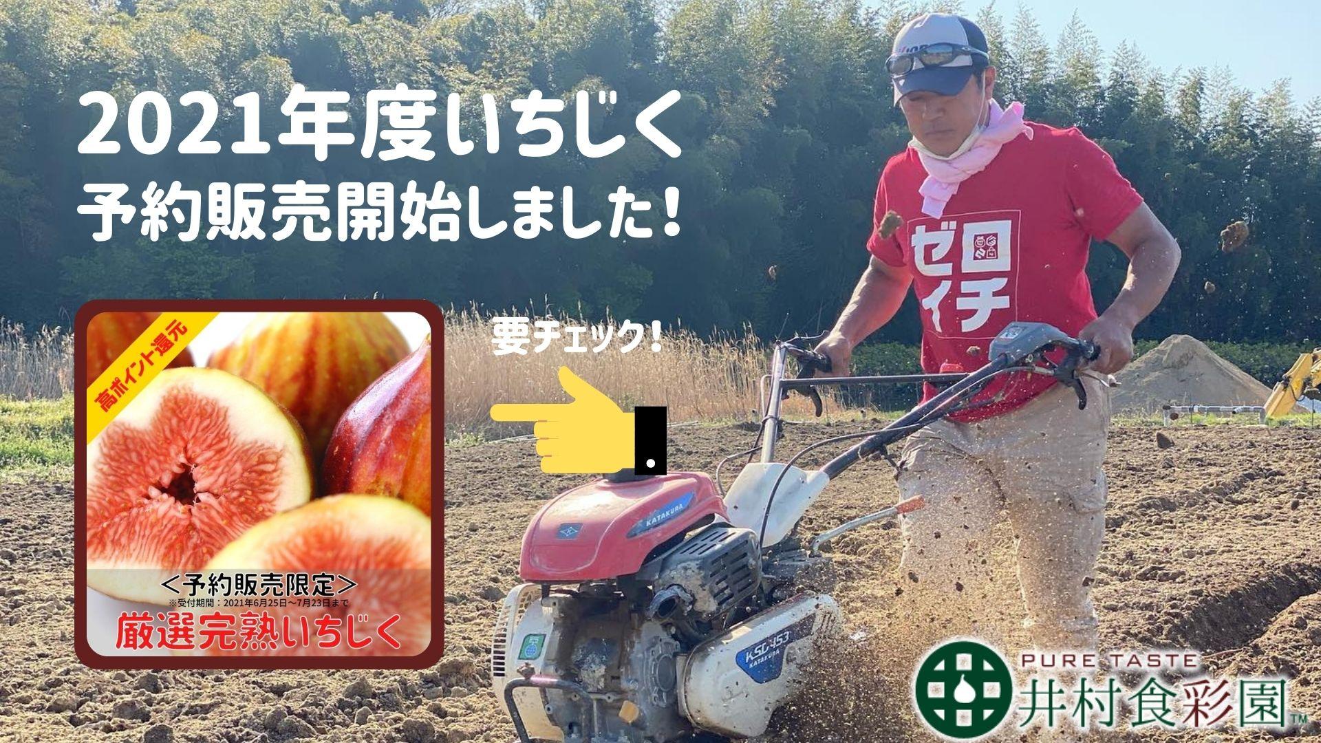 いちじく 通販 井村食彩園