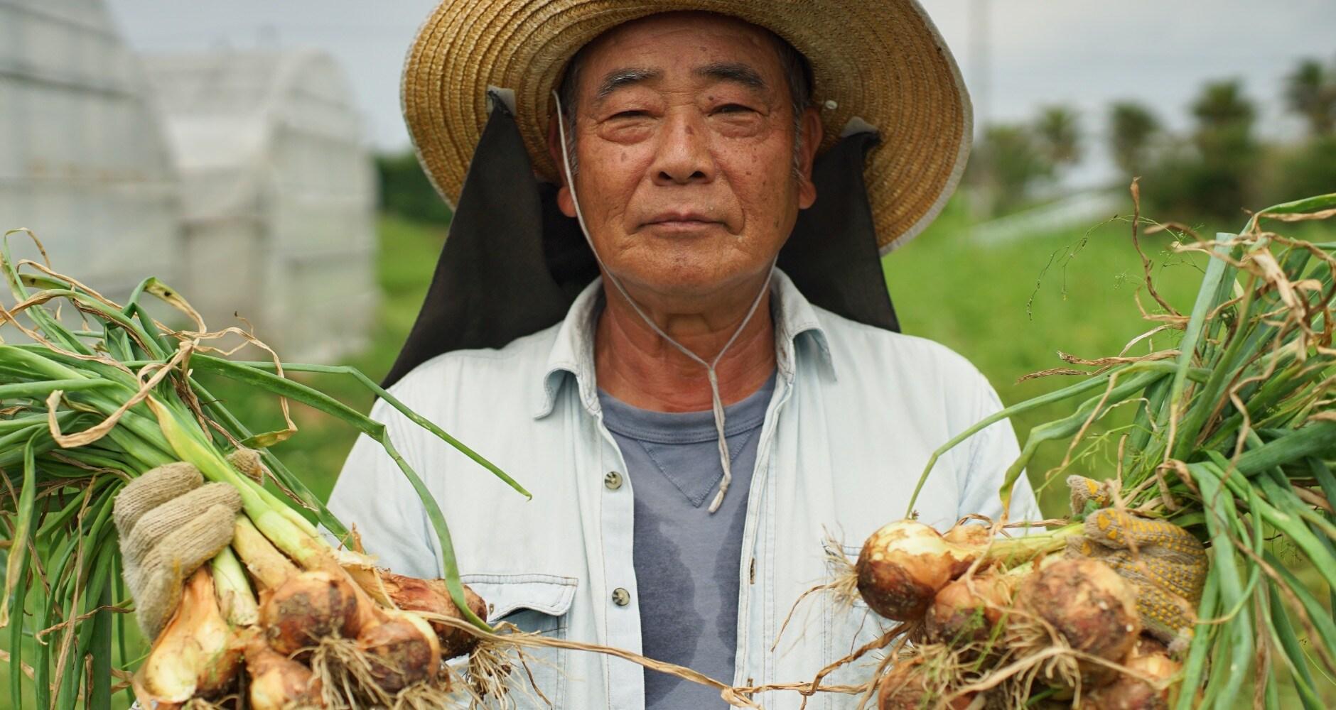 農家が元気だからやさいも元気! うるマルシェの農家は、60〜70代の農家がほとんど。そんな農家のみなさんは、驚くほど元気。どうして元気なのかを尋ねると、「農業してるとね、自然のチカラをもらえるからさぁ」と。そんなみなさんが作るお野菜は、元気いっぱい。葉っぱがシャキッとしてて、時間が経ってもすぐ腐らない。