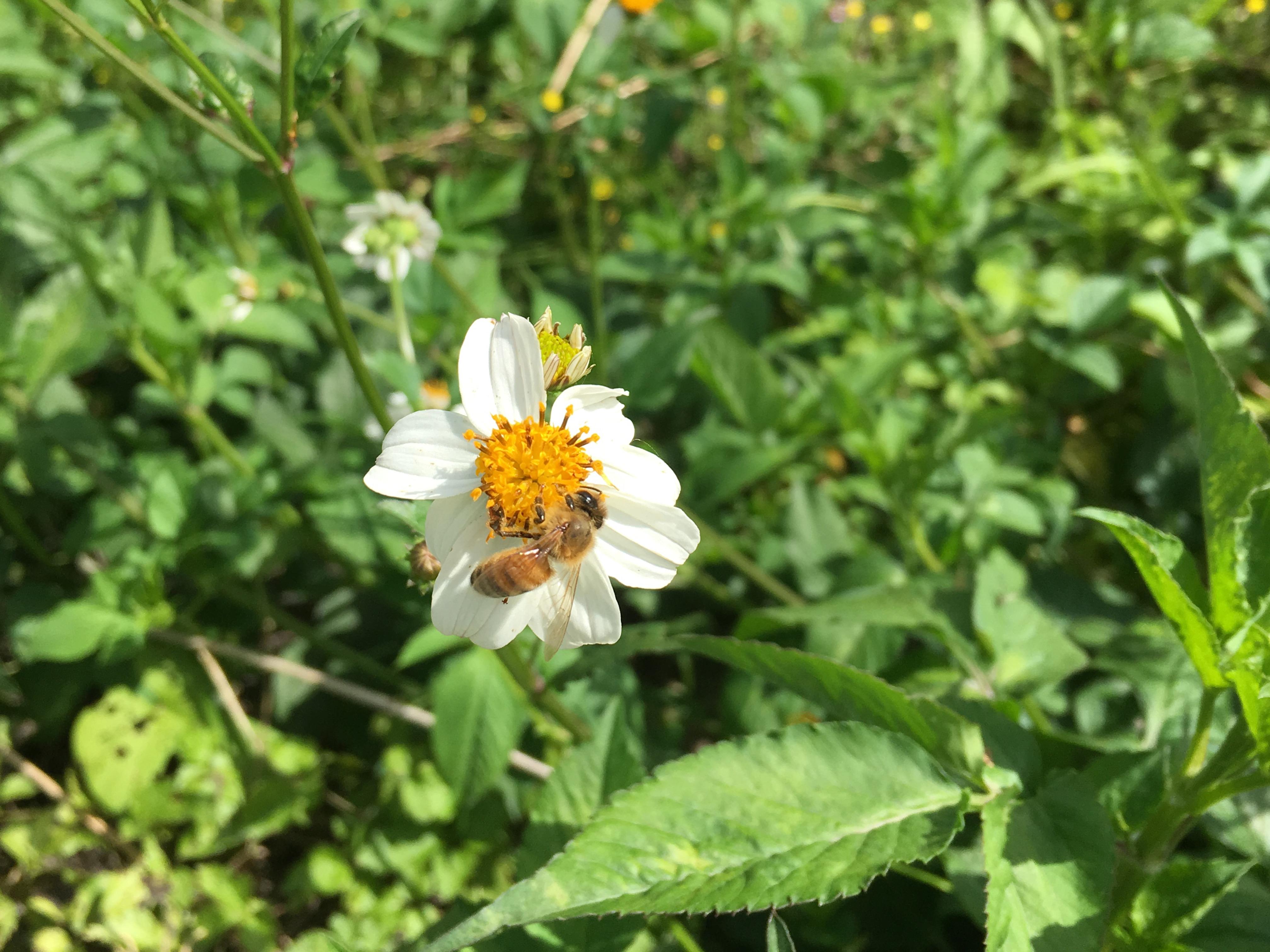 やさいが元気になる栽培法! 従来の栽培法は、化学肥料を使いましょう。農薬を使いましょう。でした。ですが、最近は栽培法が研究されて多様化しています。うるマルシェ農家は、そんな従来の栽培法から様々な栽培法を試みています。例えば、「アミノ酸液肥を使って作物のカラダを強くしよう」だとか、「蜜蜂を利用して受粉させてみよう」などです。みなさん、試行錯誤でおいしくて元気な野菜づくりを研究されているんですよ。