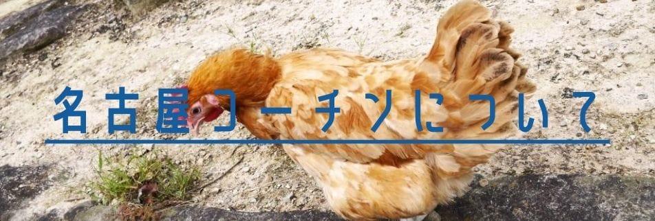 卵通販名古屋コーチン花井養鶏場